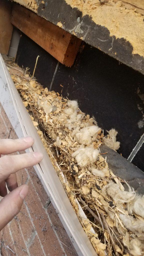 animal damage rodents in vinyl siding